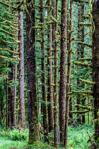 Hoh Rain Forest #1 – WA