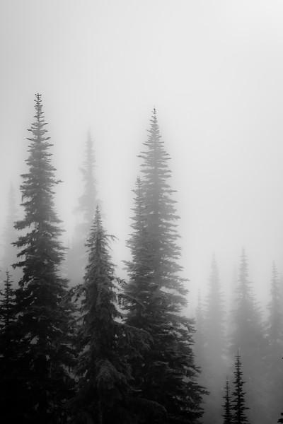 Winter Spruce #3  (B/W) - Mount Rainier National Park, WA