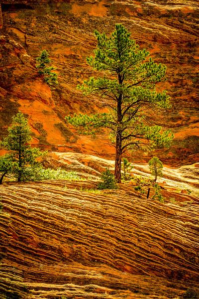 Red Rock Canyon - Colorado Springs,  CO