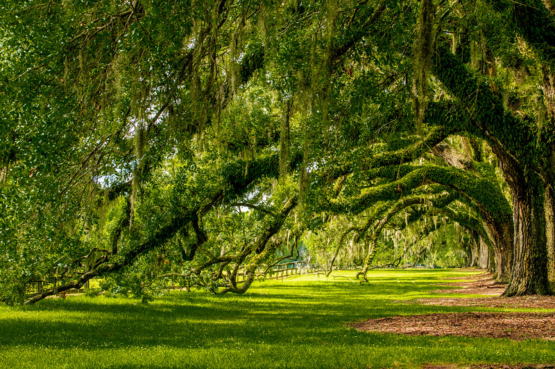 Avenue of Oaks #2 - Boone Hall Plantation, Mount Pleasant, SC