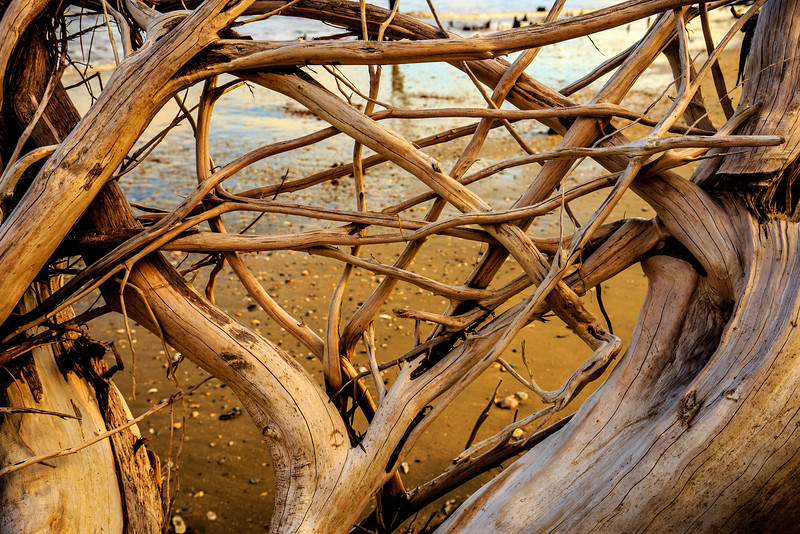 Cedar Roots - Near Botany Bay Beach, Edisto Island, SC