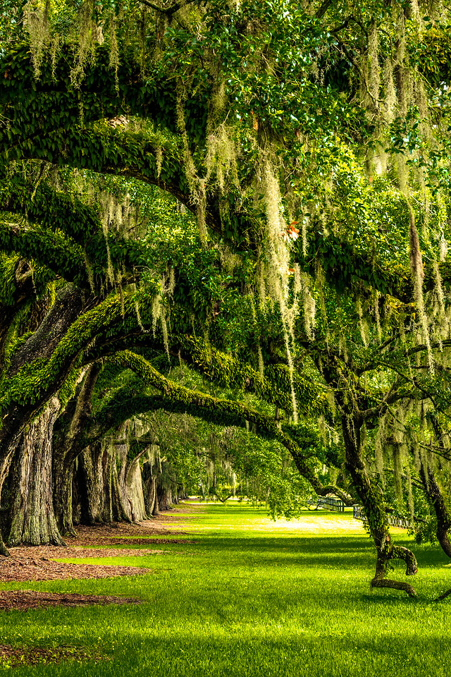 Avenue of Oaks #1 - Boone Hall Plantation, Mount Pleasant, SC