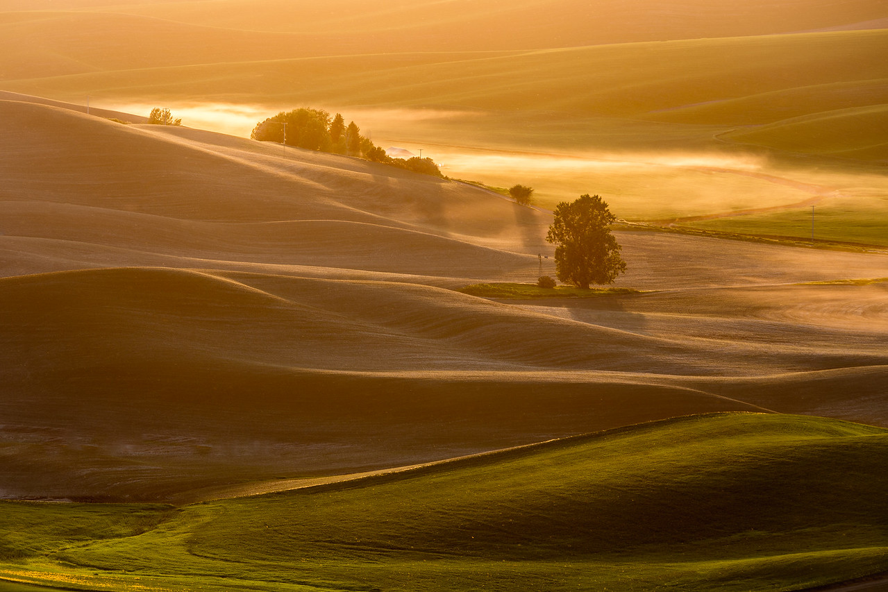 Palouse Golden - Eastern Washington