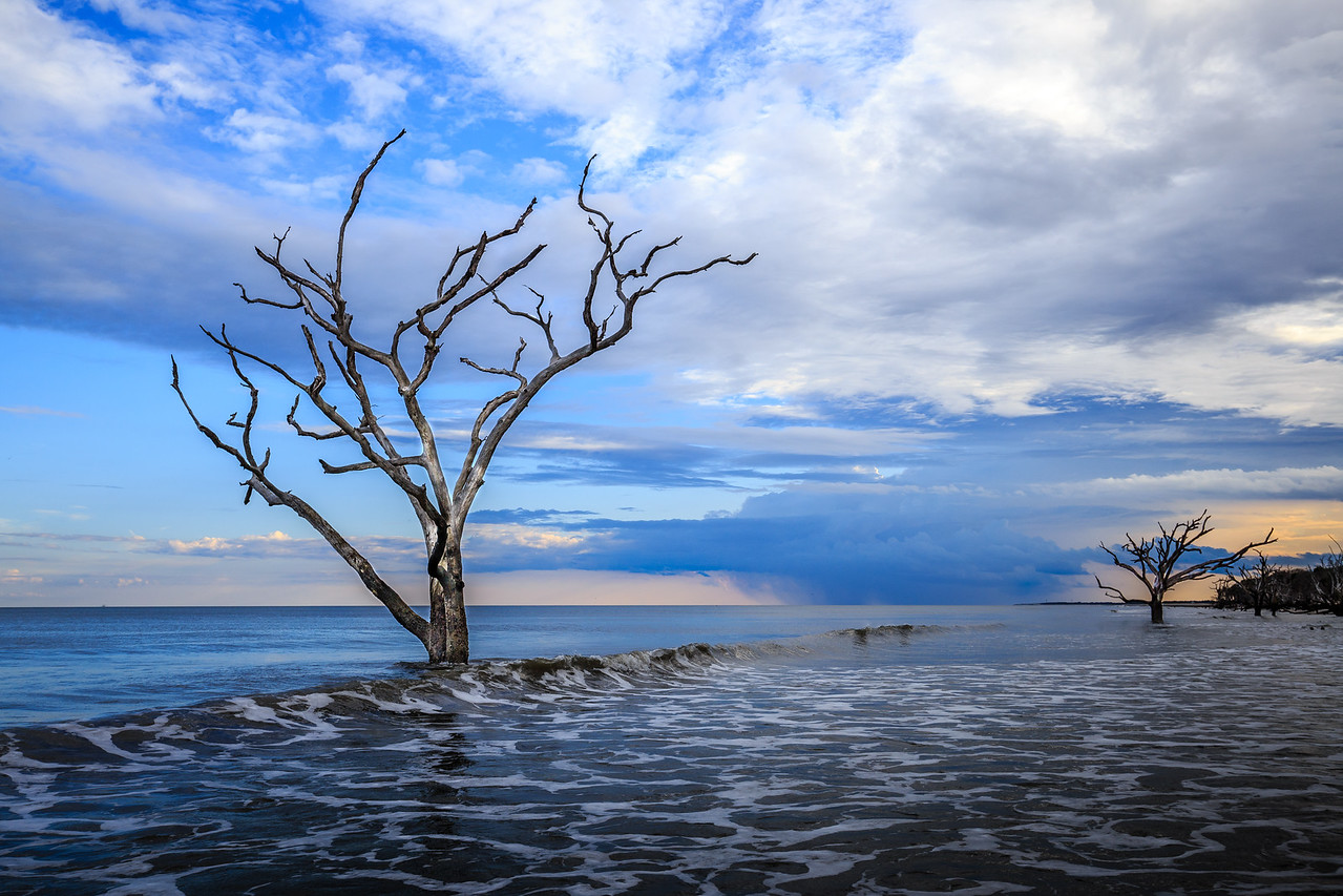 Boneyard Tree #2 - Near Botany Bay Beach, Edisto Island, SC