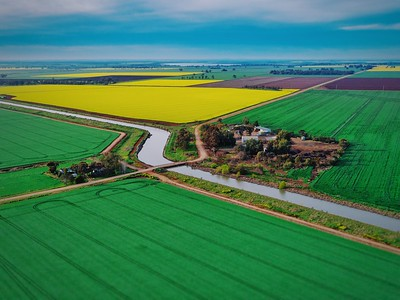 Canola Crops - Rochester