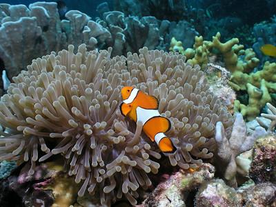 Alcoy: Mambaje Reef - 9/18/10