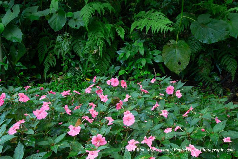 Else Kientzler Garden