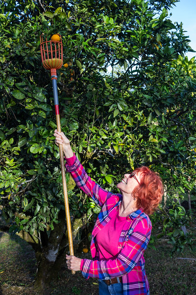 Marni - Picking Oranges (©simon@myeclecticimages.com)