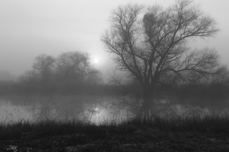 Early Morning in Black and White