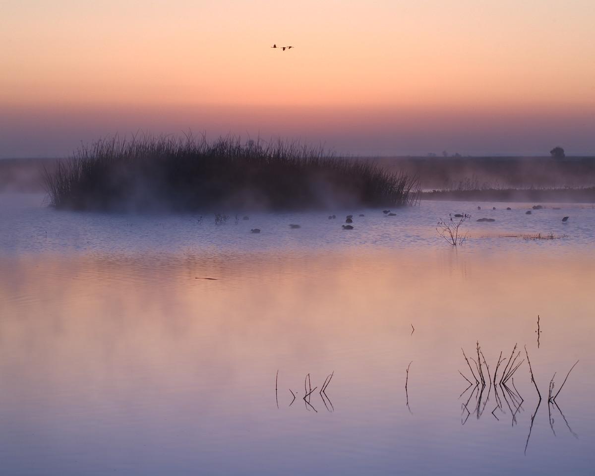 Peaceful Morning