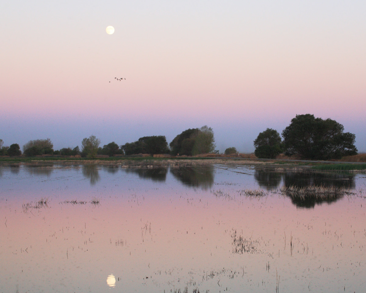 Full Moon Over the Refuge