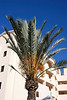 Palm at Solmar