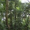 Original Canopy Tour
