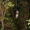 Original Canopy Tour