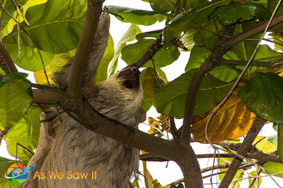 If you want to almost guarantee seeing sloths, head to Amador's Punta Culebra Nature Center.