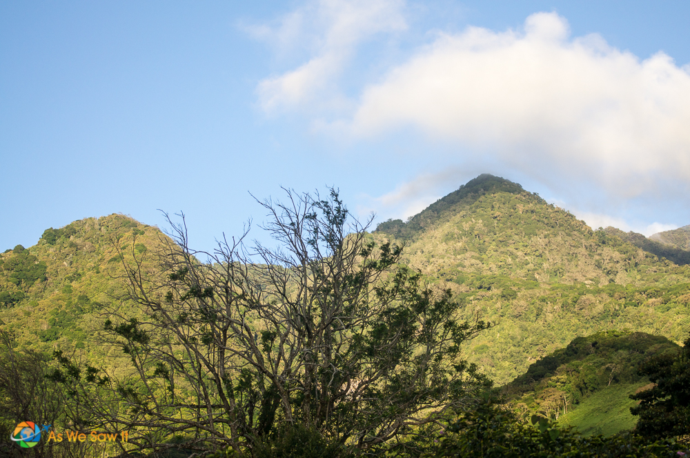 Mountain view across the coffee plantation towards Volcan Baru