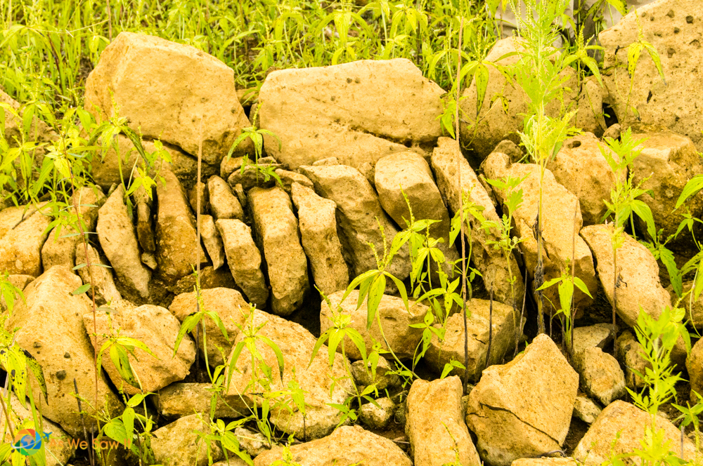 stones from the road way on the Camino Real de Panama