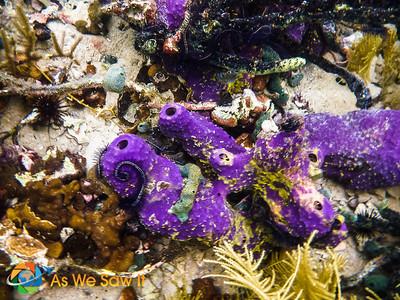 Colorful purple sponges.