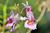 Orchids at Casa Orquideas