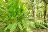 The Tropical Gardens at Casa Orquideas