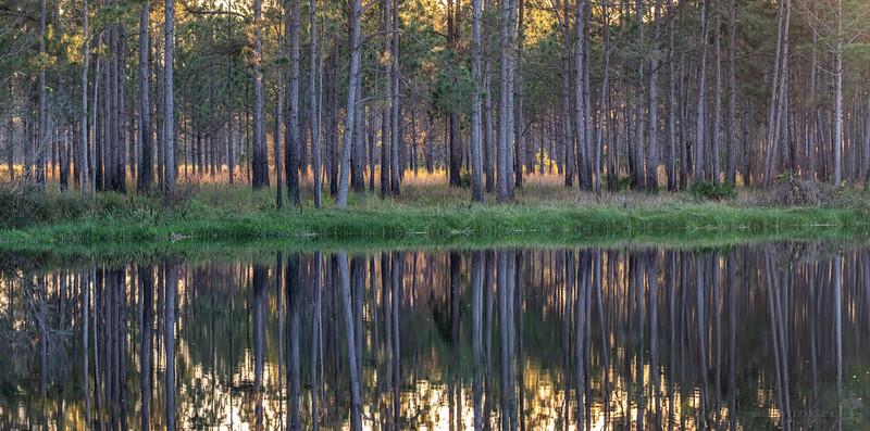 Golden Hour Forest Reflection 3