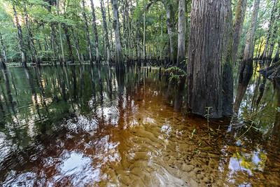 Blackwater stream floodplain