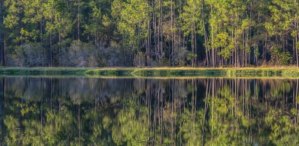 Golden Hour Forest Reflection 1