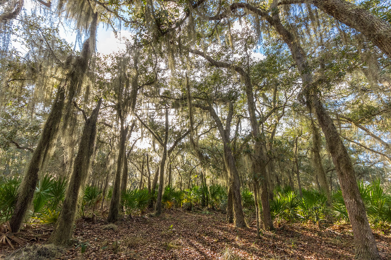 Surrounded by spanish moss