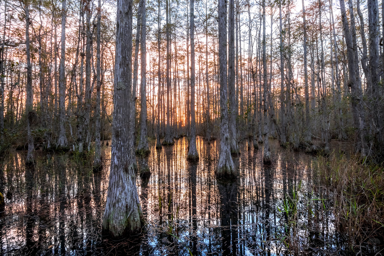 Cypress dome swamp just before sunset in central Florida [OC] [1280x854]