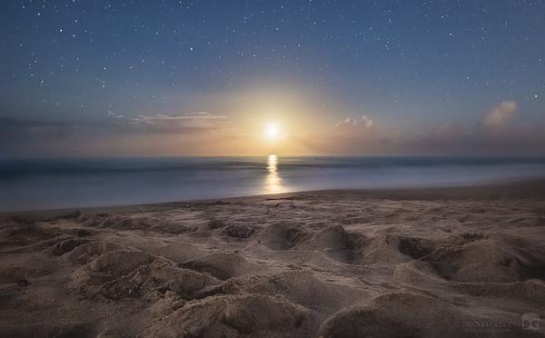 Sea turtle tracks and moonrise