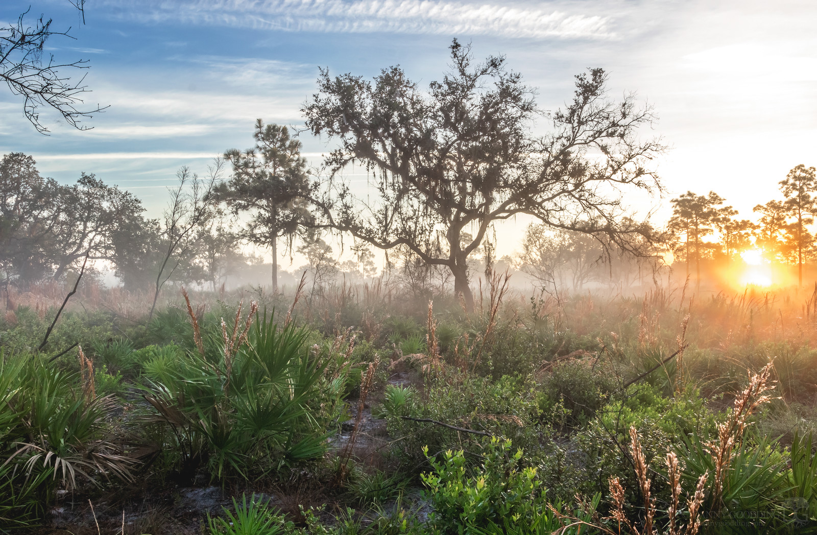 Foggy sunrise at Split Oak Forest in SE Orlando, Florida [OC] [1600x1048]