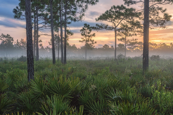 Foggy sunrise at Split Oak Forest