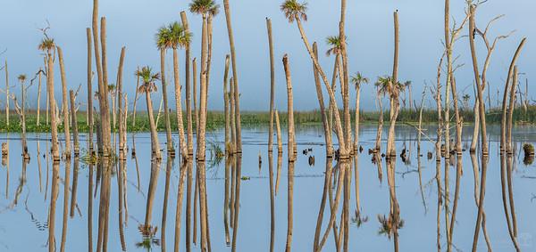 Flooded forest at Orlando Wetlands
