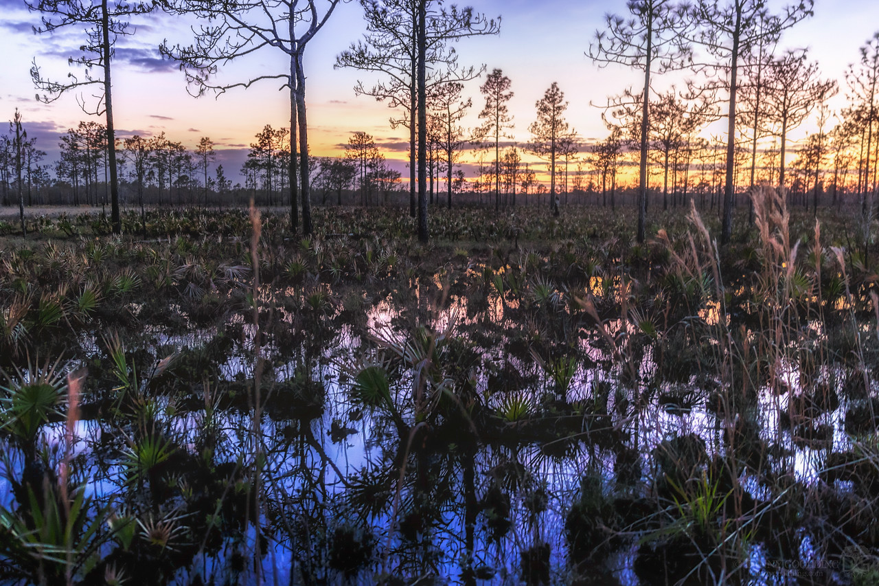 Sunset in a flooded pine flatwoods about a month after a fire swept through in central Florida [OC] [1280x854]