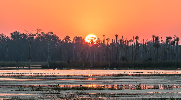 Sun rising over Orlando Wetlands