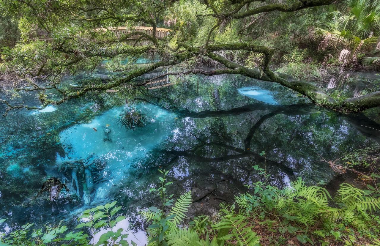 Fern Hammock Springs in central Florida, plus bonus alligator! [OC] [1280x828]