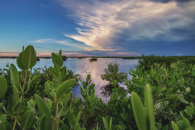 Sunset in mangroves