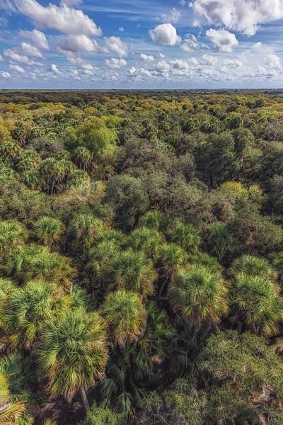 Above the trees at Myakka