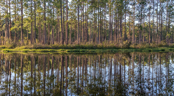 Golden Hour Forest Reflection 2