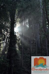 Limekiln woods w