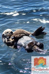 otter sandprints 2