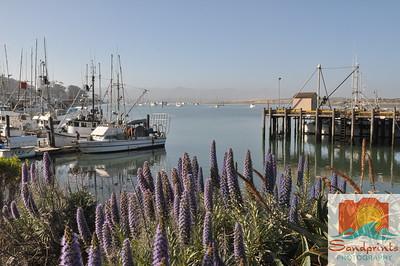 lilac harbor