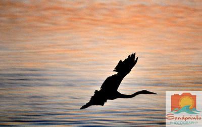 Morro Bay bird sunset 023 toned