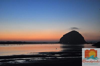 Morro Bay bird sunset 036