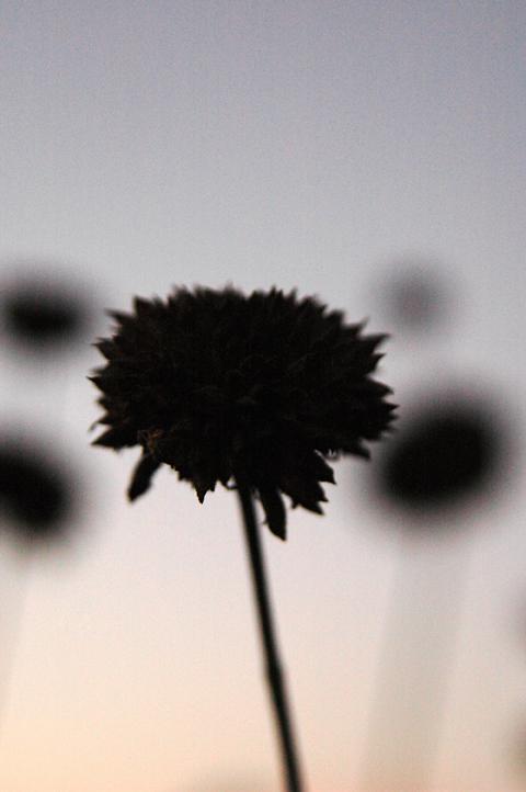 darkest flower
