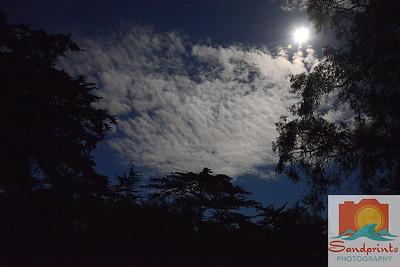 Night sky osos w