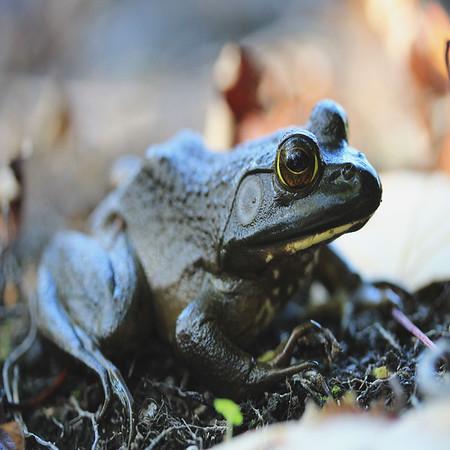 Kyra O'Neill presents Bog Frog