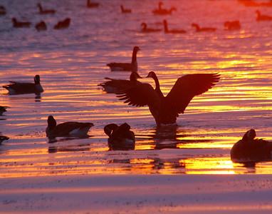 Jason Taylor presents Sunrise at Water's Edge