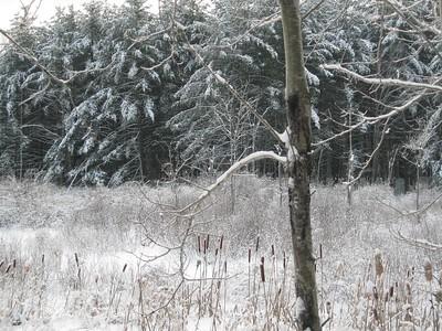 Winter Wonderland by Clara Hopkins