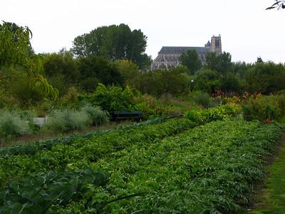 Bourges Les Marais 018 C-Mouton